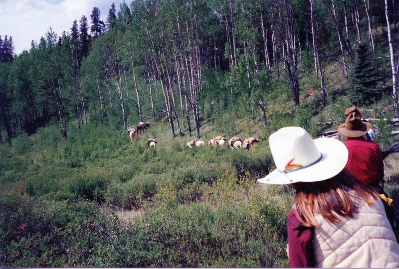 Image #3(Jasper Park & Willmore Wilderness Park Horseback Vacations)