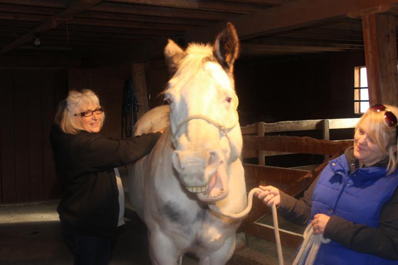 Image #0(Equine Massage)