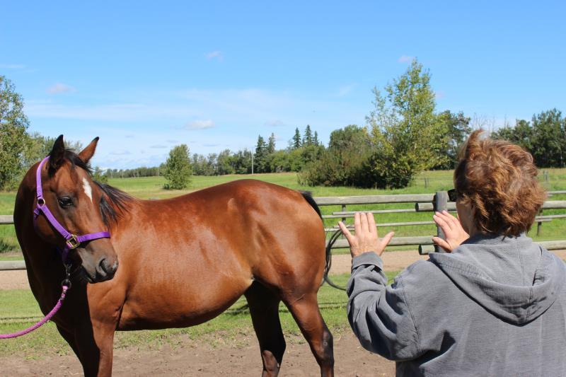 Image #2(Equine Facilitated Learning & Coaching)