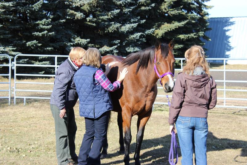 Image #1(Equine Facilitated Learning & Coaching)