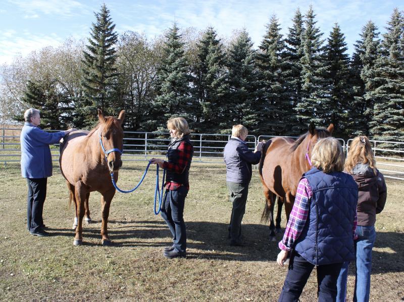 Image #0(Equine Facilitated Learning & Coaching)